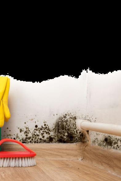usuwanie pleśni i zapachów ze ścian